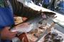 Rauchmelder-Sensor findet stinkenden Fisch