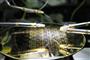 Erste integrierte Schaltkreise (IC) aus Plastik
