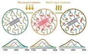 Neuer Werkstoff aus Nanoröhren und Seide
