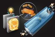 Sortierchip findet beste Strom-Bakterien