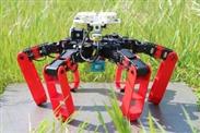 Ameisenroboter braucht kein Navi mehr