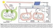 Bakterien speichern Wind- und Solarstrom
