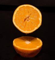 Extraktion bioaktiver Substanzen ohne Chemie