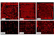 Bioprinting: Lebende Zellen im 3D-Drucker