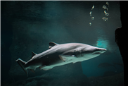 Struktur der Haifischhaut macht Turbomaschinen effizienter