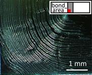 Pflanzen-Nanokristalle machen den Superkleber