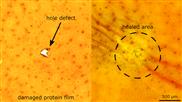 Tintenfisch inspiriertes Material heilt sekundenschnell